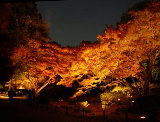 Tokugawa Garden Illuminations