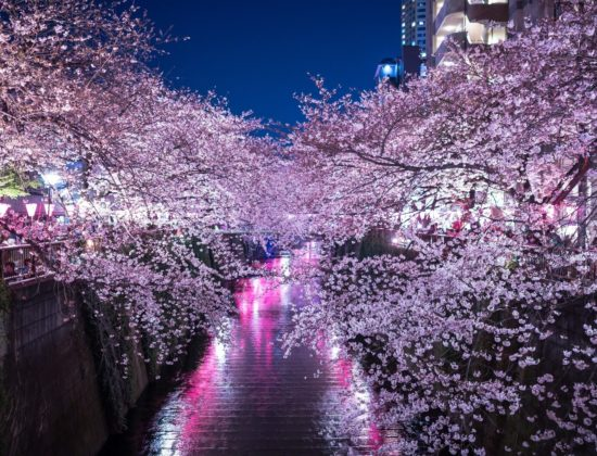Yamazaki River illumination
